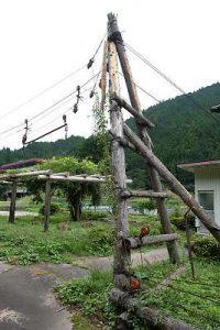 木材搬出用の架線の支柱(智頭町)
